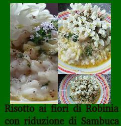 Risotto con fiori di Robinia e Sambuca