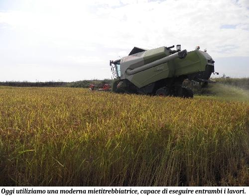 Mietitrebbia mentre raccoglie il riso presso Riso Corbetta